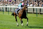 Frankel wins 2000 Guineas Newmarket 2011 Acrylic