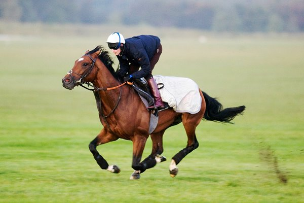 Frankel on the gallops at Newmarket 2011
