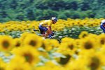 Lance Armstrong Sunflowers Prints