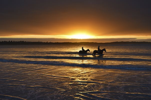 Horses at lady Bay Beach Australia