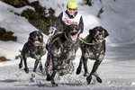 International Dog Sled Race Todtmoos Germany 2017 Prints