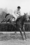 Pat Taaffe on Arkle Whitbread Gold Cup Sandown Park 1965 Prints