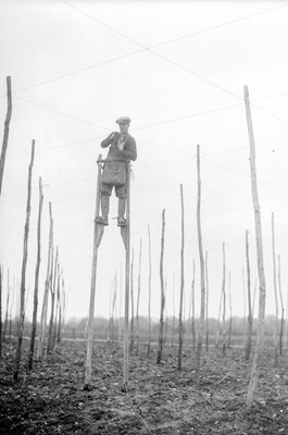 Farm Worker On Stilts