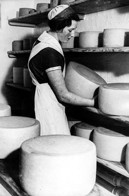 Cheese Turning