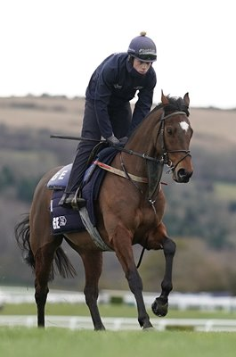 Tiger Roll Double Grand National Winner Cheltenham Gallops 2019
