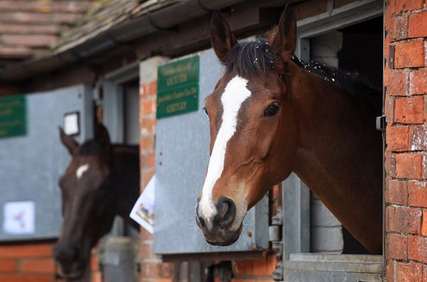 Kauto Star and Denman Ditcheat Stables Wincanton 2008