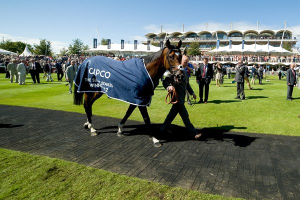 Frankel wins Sussex Stakes Goodwood 2012