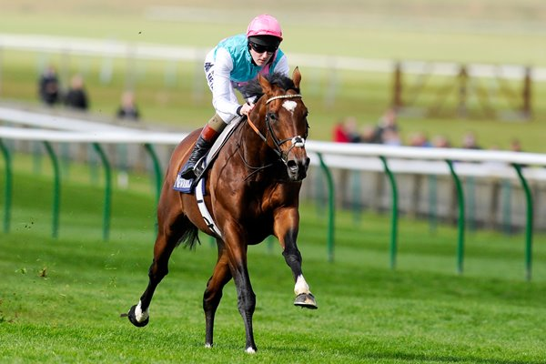 Tom Quelly & Frankel Newmarket Gallop 2012