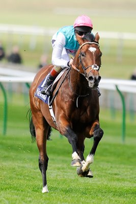 Frankel trains at Newmarket September 2012