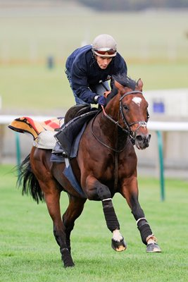 Frankel trains at Newmarket October 2012