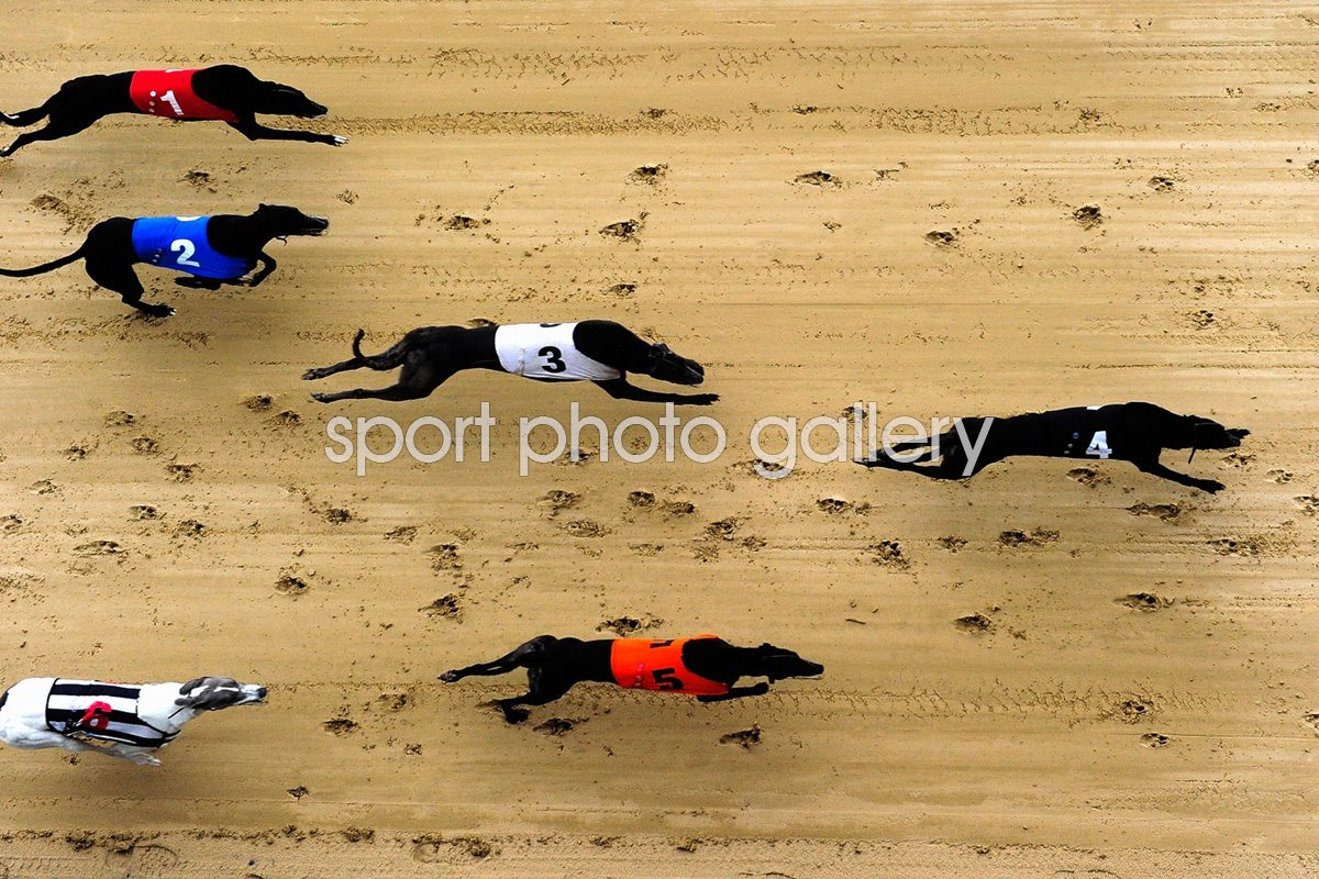 Greyhound Races at Romford Essex 2010
