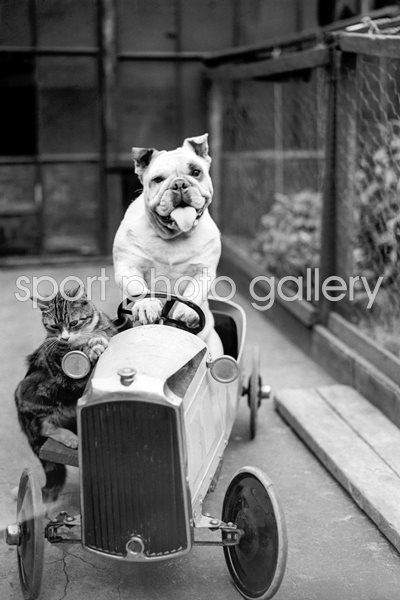 Dog And Cat Car 1933