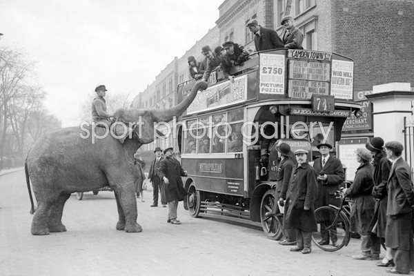 Circus elephant in London 1928