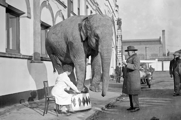 Elephant's pedicure 1928