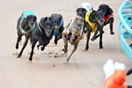 Greyhound Racing In Australia Prints