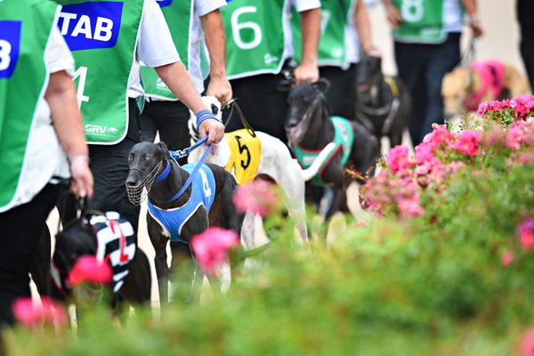 Greyhound Racing In Australia 2015